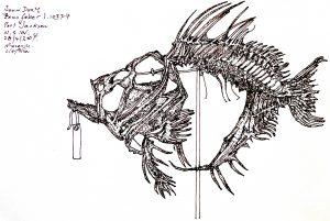 John Dory, 2004, ink on paper